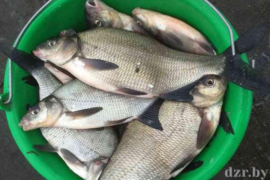 Полезные советы рыболовам от областной инспекции охраны животного и растительного мира