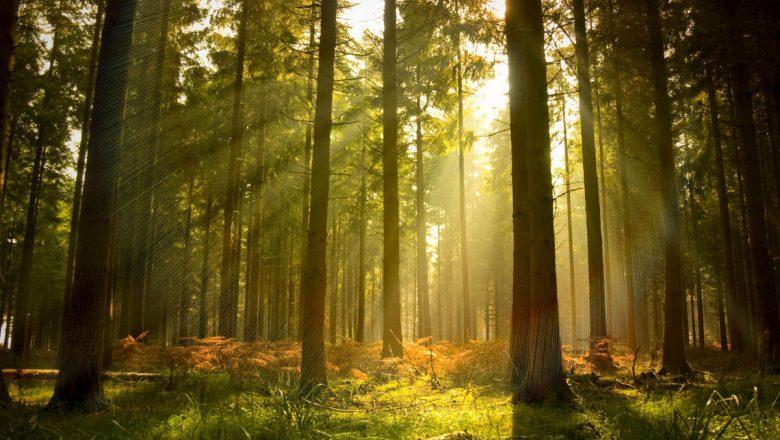 Осенняя акция «Чистый лес» пройдет в Беларуси 17 октября