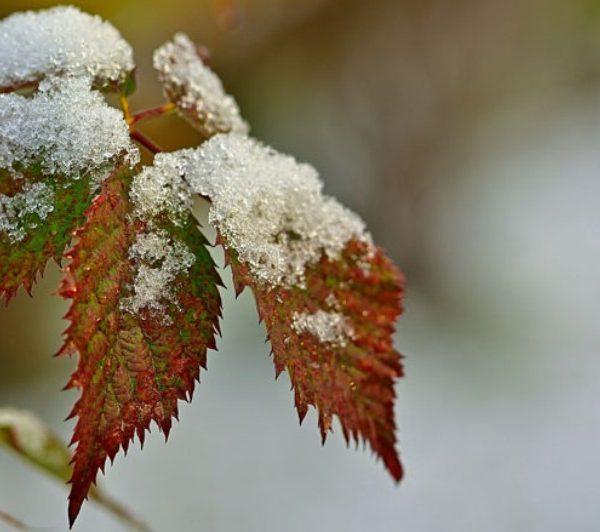 Погода на завтра: ожидаются снег и гололедица