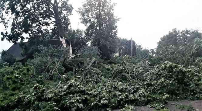 В Дзержинском районе падающие деревья порвали линии электропередач