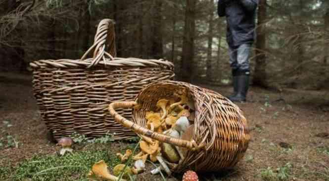 Чтоб в трех соснах не заблудиться… Правила грибника
