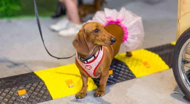 ДогФэст-2019: 17 августа в Фаниполе пройдет праздник для людей и собак