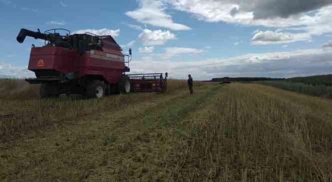 Дзержинские сельхозпроизводители – в лидерах