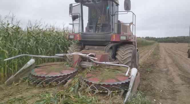 Происшествие на кукурузном поле в Дзержинском районе. Пострадала женщина