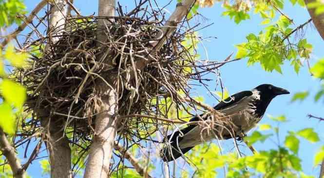 Уничтожение гнезд птиц в Беларуси влечет за собой ответственность