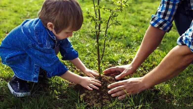 Посадить дерево и построить детскую площадку: для дзержинцев объявлен новый опрос общественного мнения
