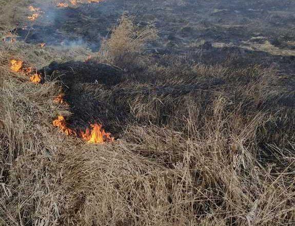 РОЧС: причины пожаров сухой растительности и способы их предупреждения
